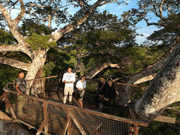 Tambopata Canopy Walkways Activity 4