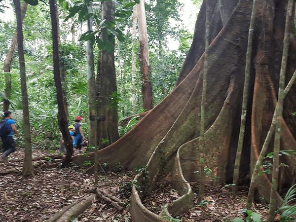 Tambopata Jungle Excursion 2