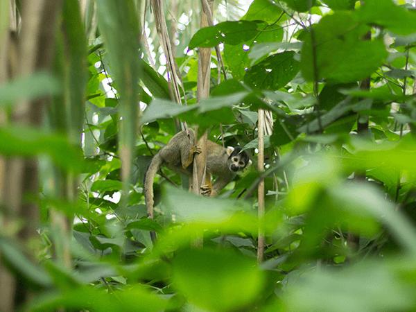 Tambopata Jungle Excursion 3